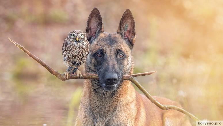 Собака и сова, которые жить не могут друг без друга