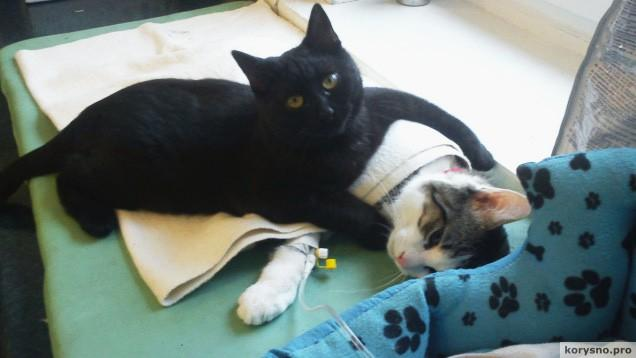 В польском приюте для животных «работает» кот-медбрат