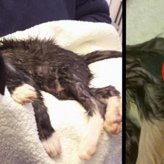 Лапы котенка были приклеены к его голове. Только посмотрите, как он выглядит сейчас!