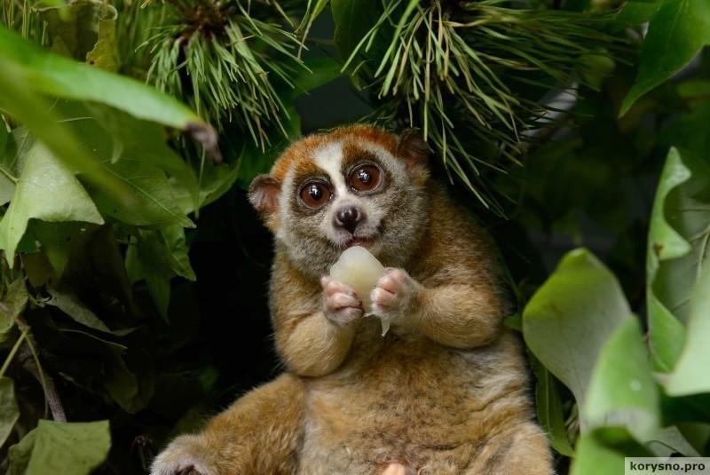 Лори – самые милые существа на планете!