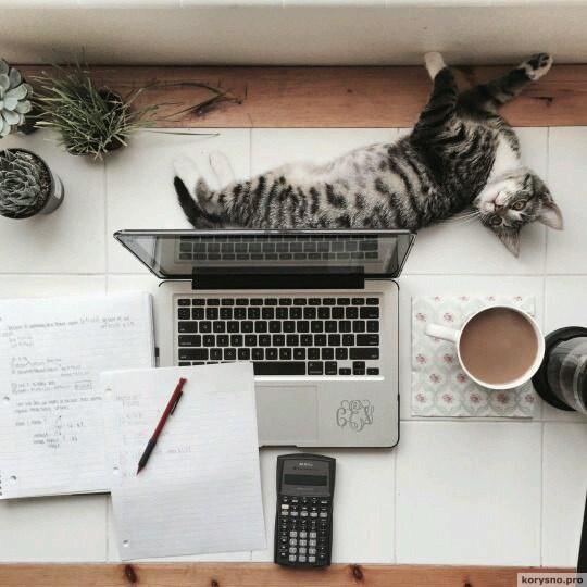 5 сайтов , которые помогут провести время в Интернете с пользой!