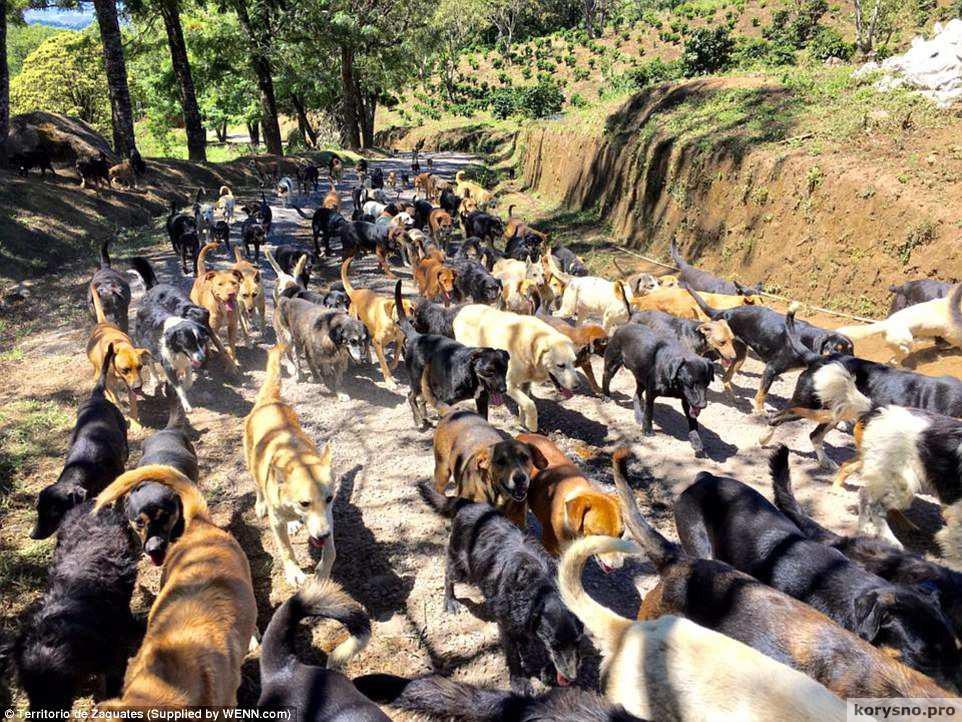 Приют для тысячи бездомных собак в Коста-Рике