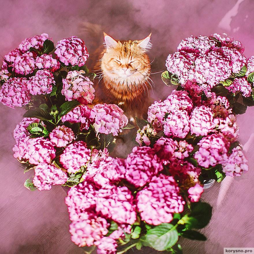 ryzhiy-kot-fotograf-Kristina-Makeeva_11