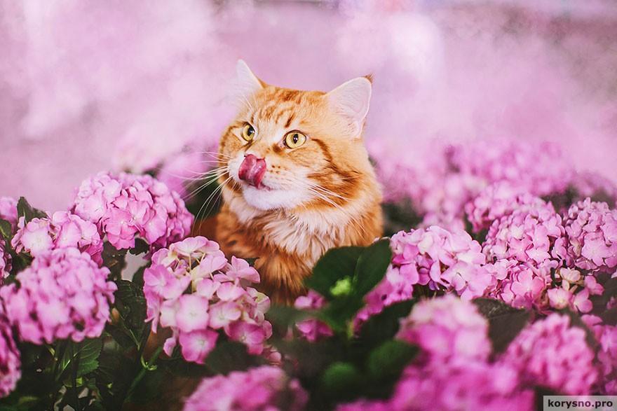 ryzhiy-kot-fotograf-Kristina-Makeeva_21