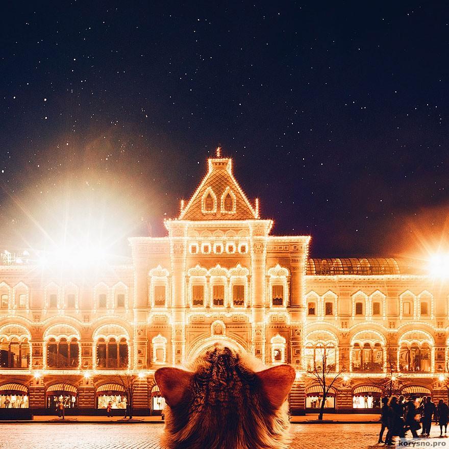 ryzhiy-kot-fotograf-Kristina-Makeeva_23