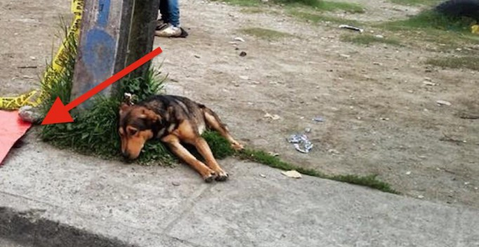 Кажется, что это обычное фото собаки. Но ты не сможешь сдержать слёз, узнав, куда она смотрит...