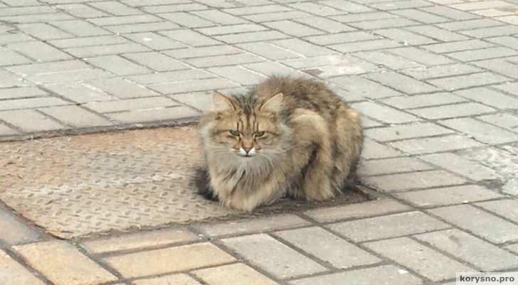 В Белгороде появился кот «Хатико», который ждет своего хозяина целый год