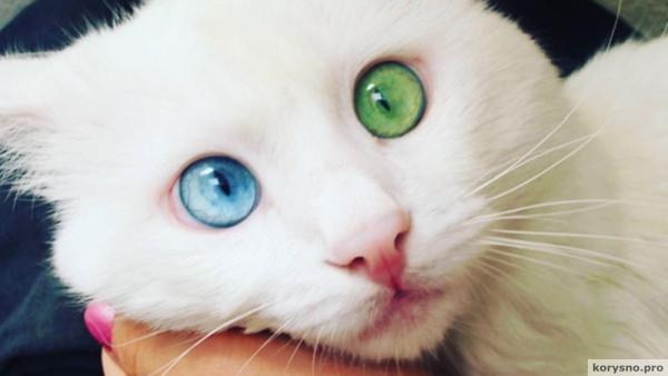 Выбран «самый красивый в мире» кот