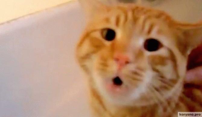 Она кладет кота в ванну. Но звук, который он издает на 0:07, предполагает нечто другое!