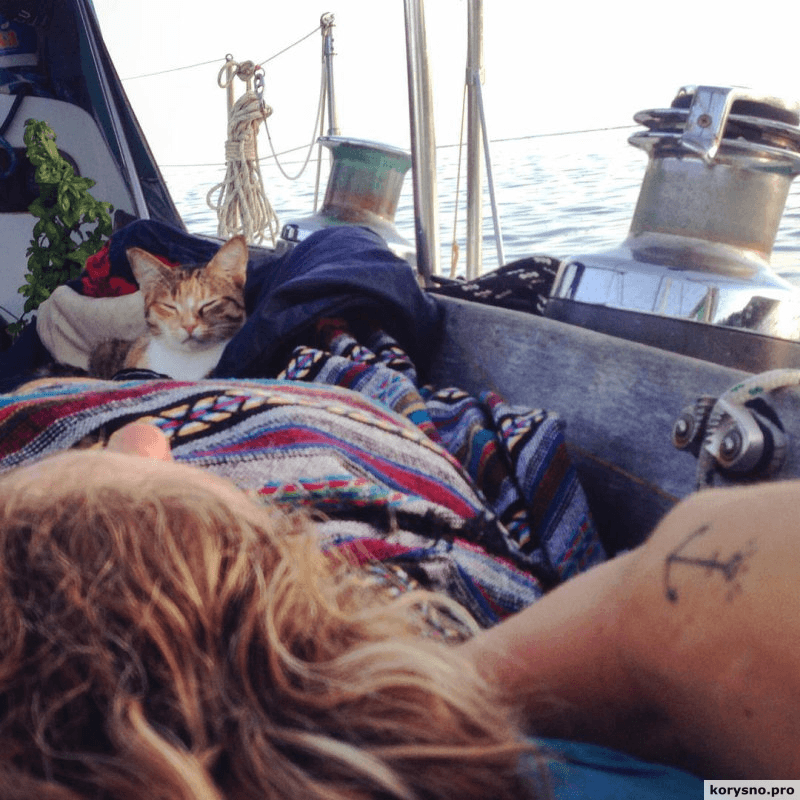 Кругосветное путешествие на лодке вместе с кошкой