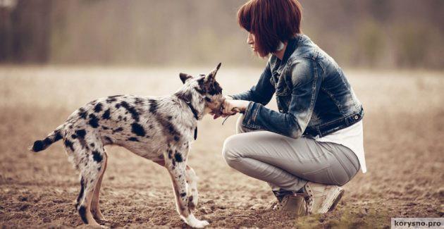 Что нужно знать, прежде чем взять собаку из приюта