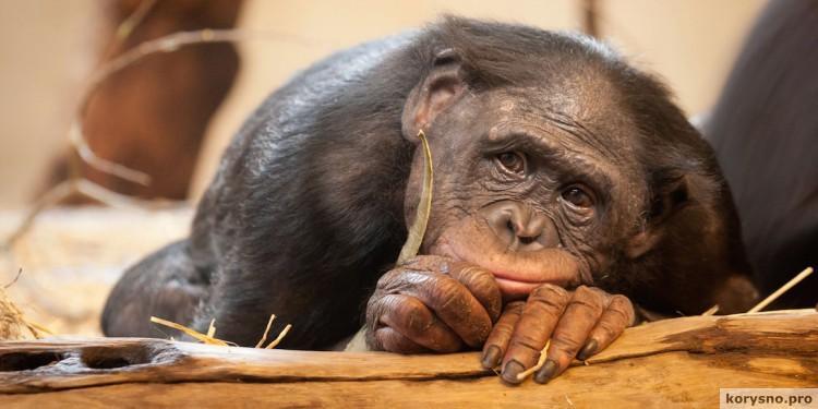 Деньги портят даже обезьян