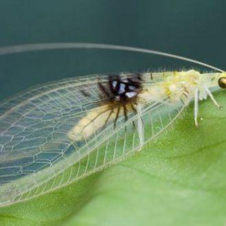 Гении маскировки сможете разглядеть насекомых на этих фотографиях