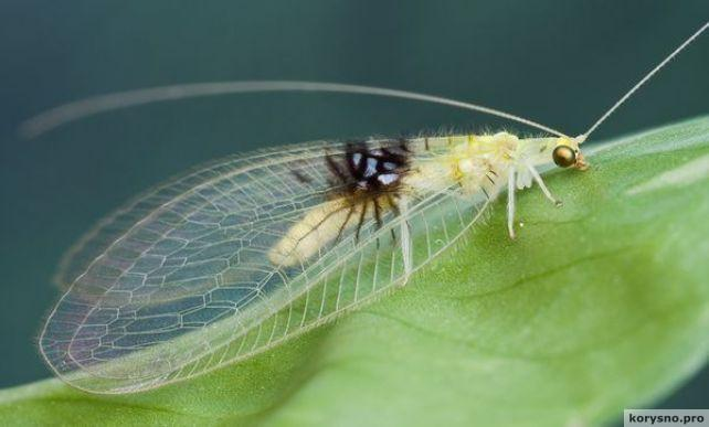 Гении маскировки: сможете разглядеть насекомых на этих фотографиях?