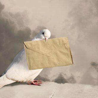 Голубиная почта популярна более чем в 60 странах