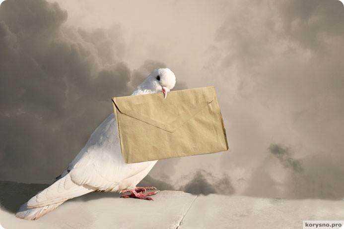 Голубиная почта популярна более чем в 60 странах!