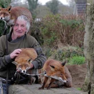 Ирландец, приютивший дома трёх диких лис