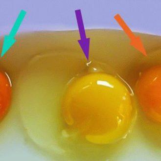 Как проверить куриные яйца