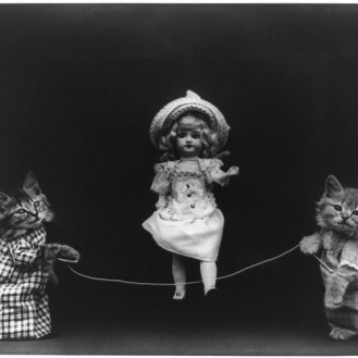 Необычные сюжеты с животными на 20 снимках, которым много лет