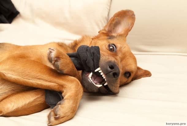 О чём должен знать каждый хозяин собаки