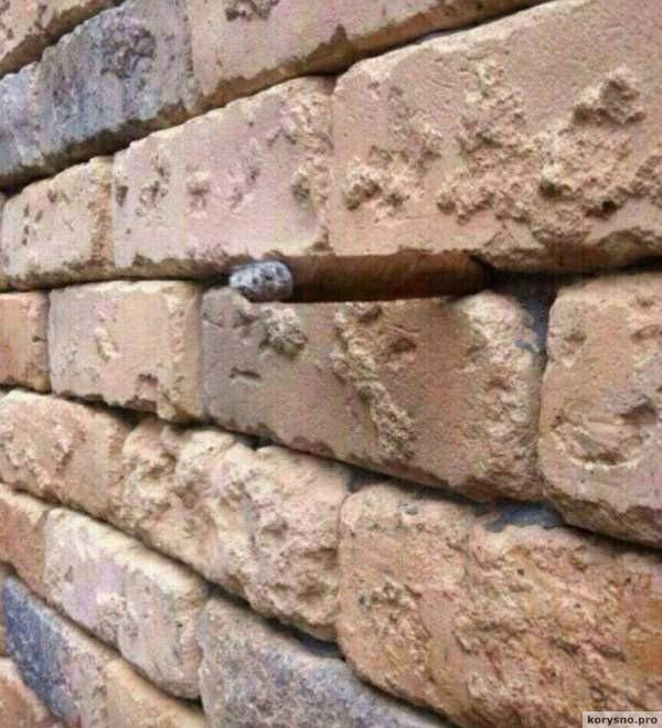 Оптическая иллюзия с кирпичной стеной свела Интернет пользователей с ума