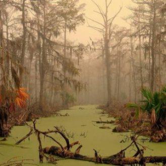 Почему болото засасывает