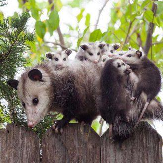 Трогательнейшие семейные сцены из мира животных