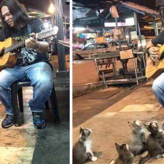Все проходили мимо этого уличного музыканта. Но четверо котят не смогли устоять