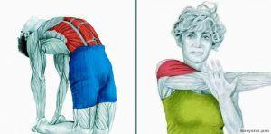 20 изображений, которые покажут, какие мышцы вы растягиваете