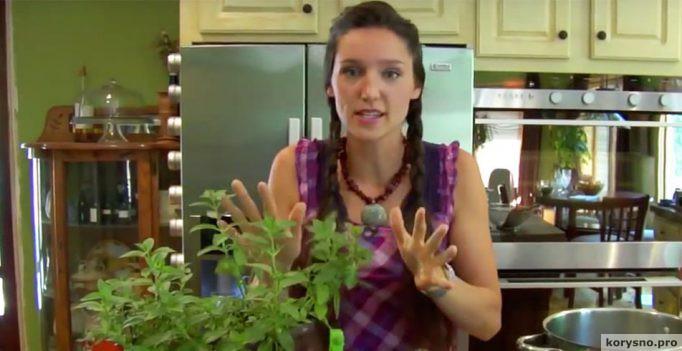 Это комнатное растение защитит ваш дом от тараканов, пауков, комаров и мух