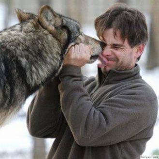 Минимум дважды волк становился лучшим другом человека