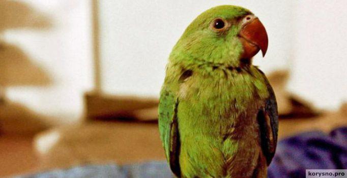 Ругающийся попугай заинтересовал полицию в качестве свидетеля убийства