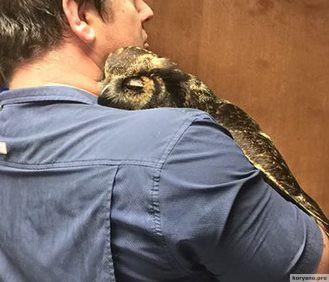 Совы тоже умеют обниматься