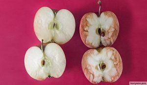 Учительница на примере яблок показала детям, к чему приводят издевательства в школе
