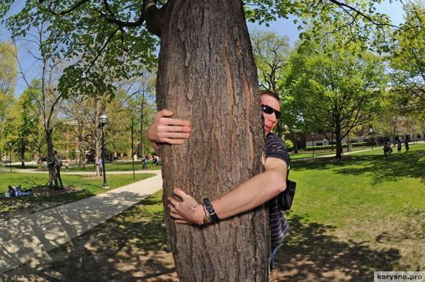 Врачи говорят, что вы должны обниматься с деревьями!