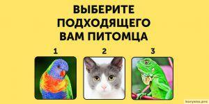 Гарвардский психолог выделил 8 типов интеллекта. Какой из них ваш?