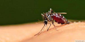 Почему на вас постоянно нападают комары, а на других людей — нет?