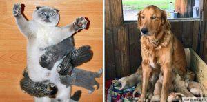15 фотографий о том, что животным тоже тяжело быть родителями