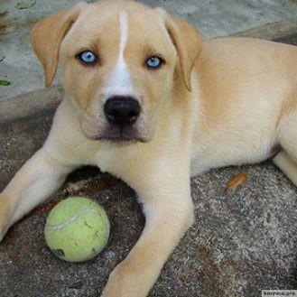 15 пород собак, в реальность которых сложно поверить