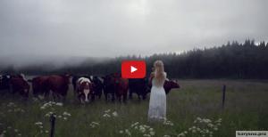 Кульнинг, или Как в Швеции подзывали коров