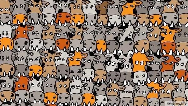 Свежая загадка, покорившая Интернет: а вы найдете собаку в стаде коров?