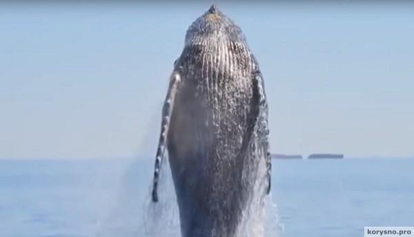 Они спасли умирающего кита. То, что он сделал в ответ, людям не забыть до конца жизни