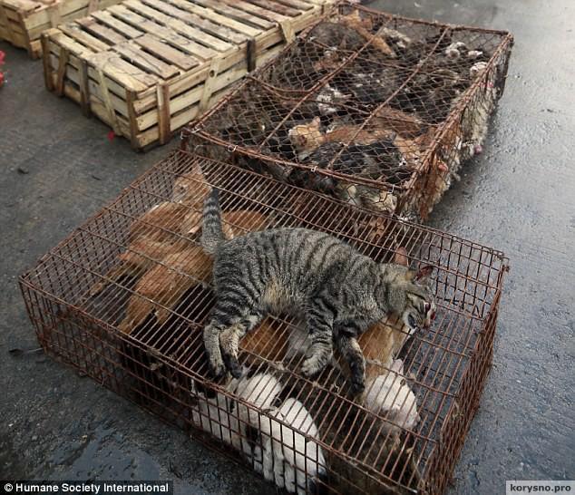 Кошачьи кошмары провинции Гуандун (Китай)