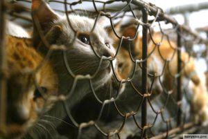 Кошачьи кошмары провинции Гуандун (не рекомендуется просмотр впечатлительным)