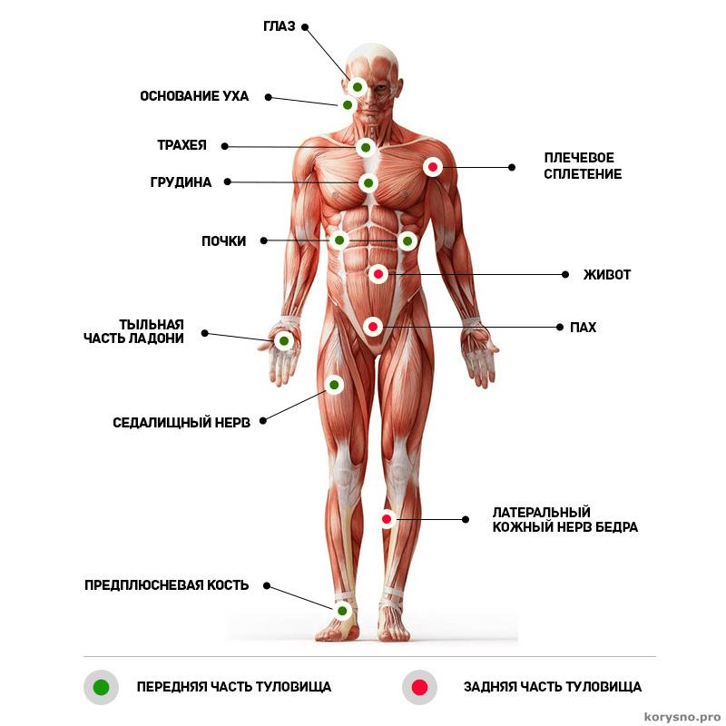 12 болевых точек