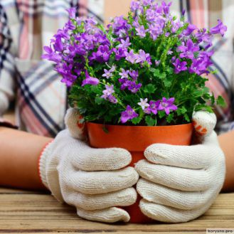 AliExpress: самые интересные находки для сада на подоконнике