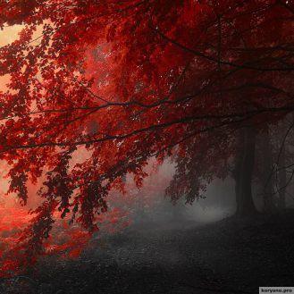 Цветные туманы фотографа Янека Седлара