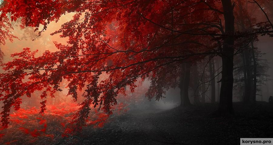 Цветные туманы фотографа Янека Седлара (Janek Sedlar)