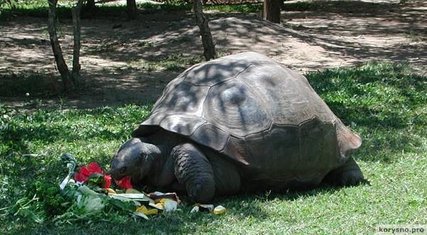 Старейшие черепахи в мире. Старейшие животные