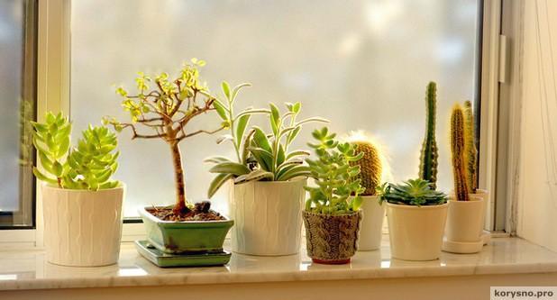 Вот 10 растений, которые притягивают в дом позитивную энергию